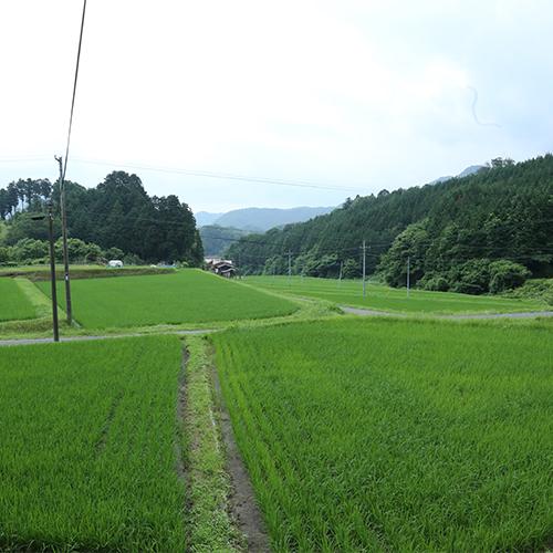 近所の田んぼ。この土地に育った事は、とても恵まれたことだと最近改めて思います。