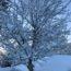 邑南町の雪景色
